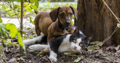 Comment choisir entre un chat et un chien?