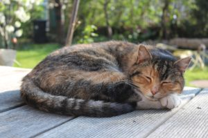 Pourquoi mon chat dort toute la journée?