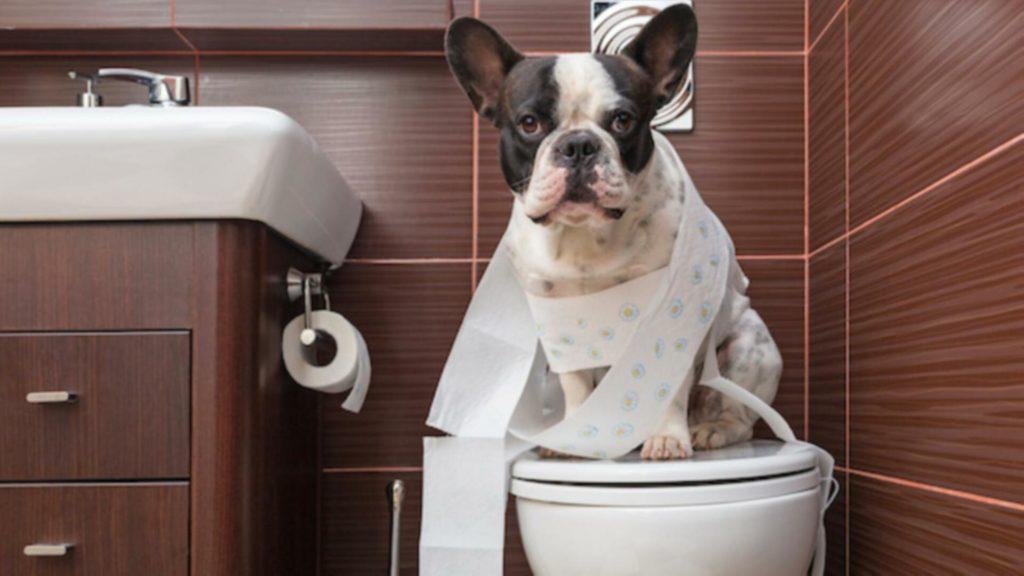 éducation chien propre
