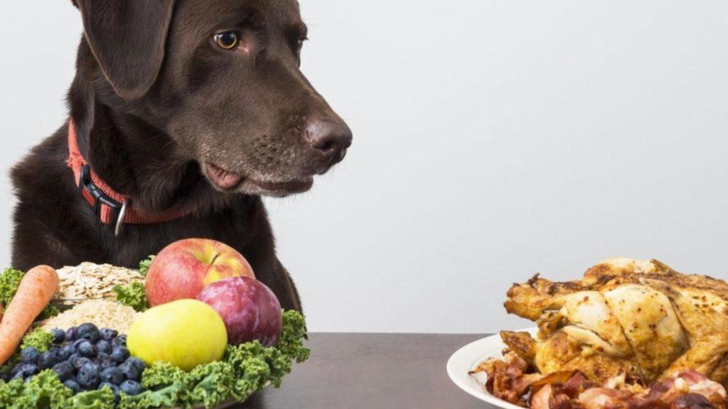 Alimentation pour chien fait maison
