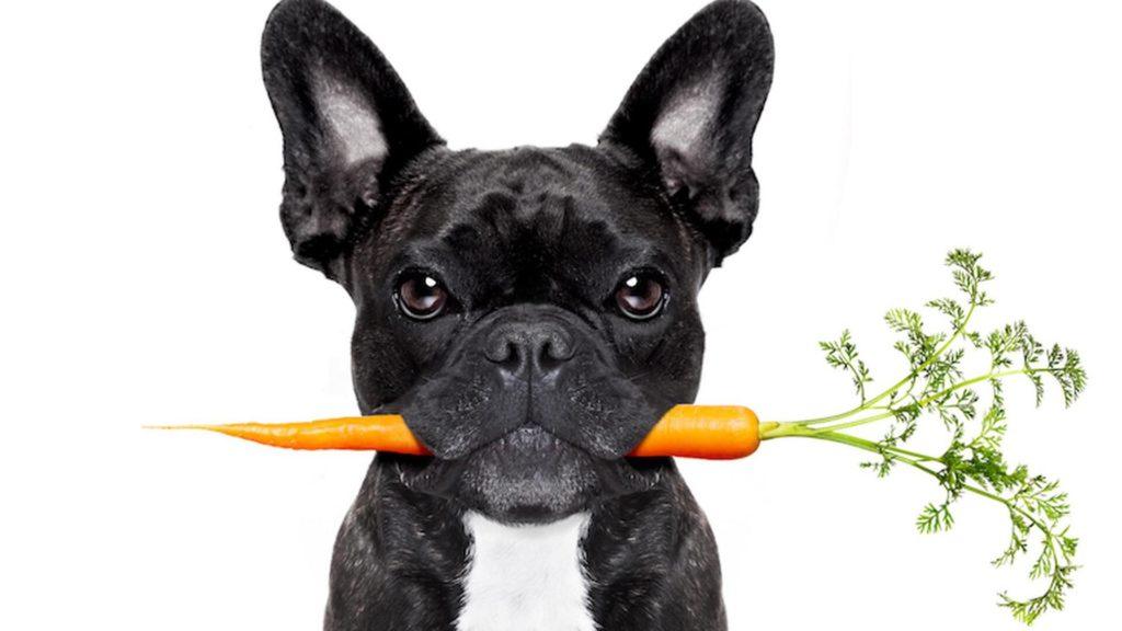 régime et alimentation pour chien