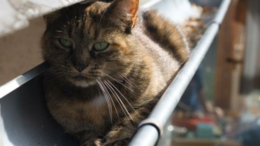 Races de chat et chat de gouttière