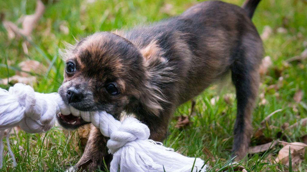 corde jouet pour chien