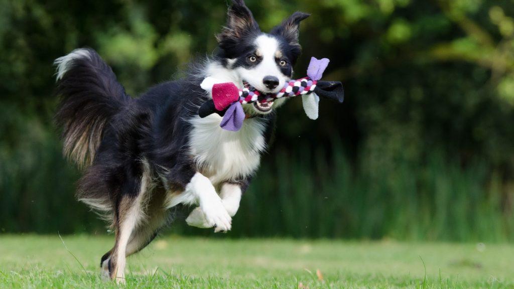 jouet à lancer pour chien