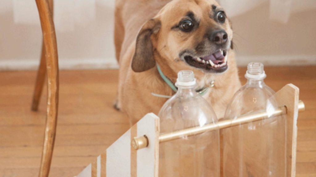 jouet de réflexion pour chien