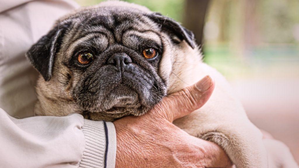 assurance et mutuelle pour chien