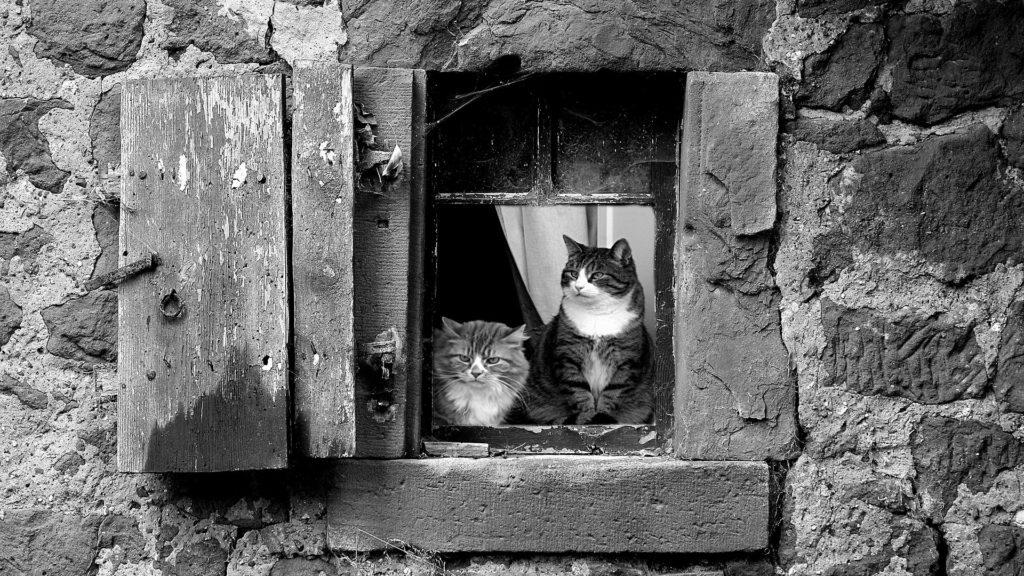espérance de vie d'un chat en appartement