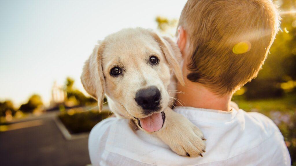 photo assurance pour chien