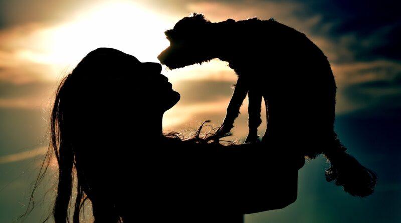 santé et assurance pour chien