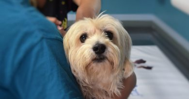 vaccin pour chien
