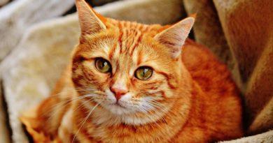L'age des chats – Comment calculer l'age de son chat ? Notre guide