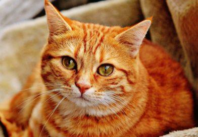 âge des chats