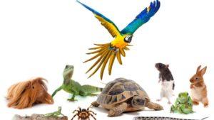 assurance Nouveaux animaux de compagnie