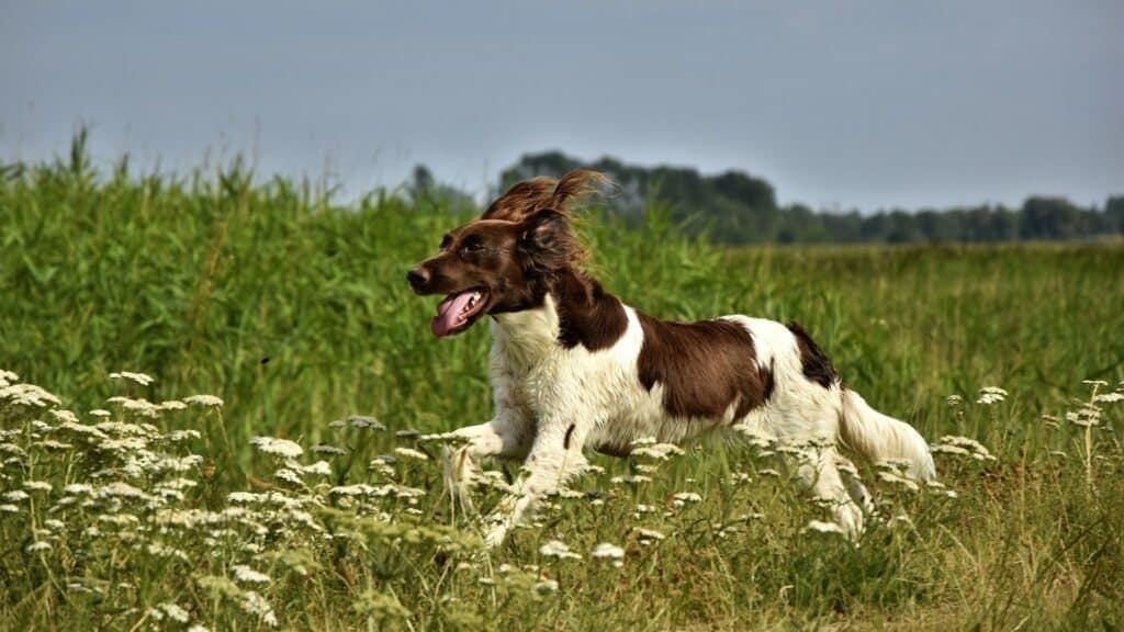 assurance chien de chasse en 2021