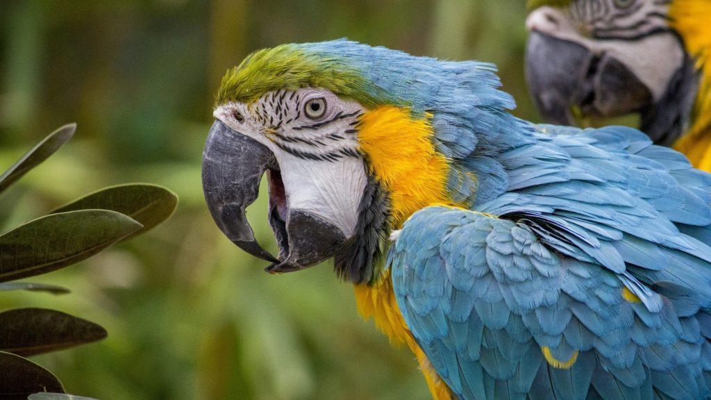 assurance et mutuelle perroquets