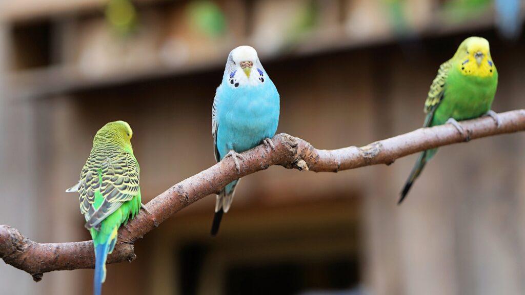 assurance perroquets 2021