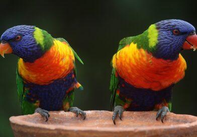 assurance perroquets