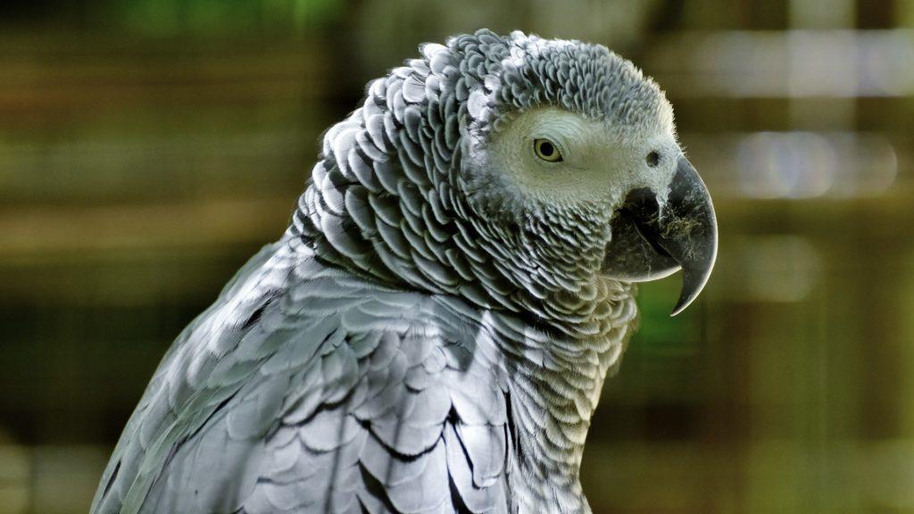 assurance perroquets rares