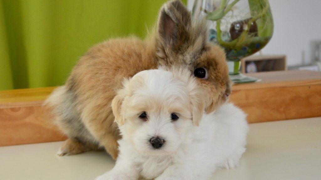 assurance pour lapins et autres animaux