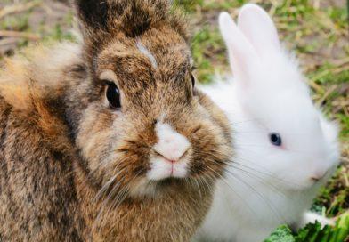 assurance pour lapins
