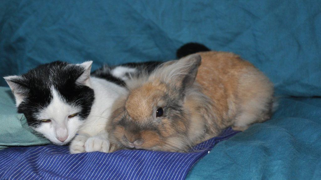 assurance pour lapins domestiques
