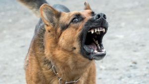 chien et Collier anti-aboiement