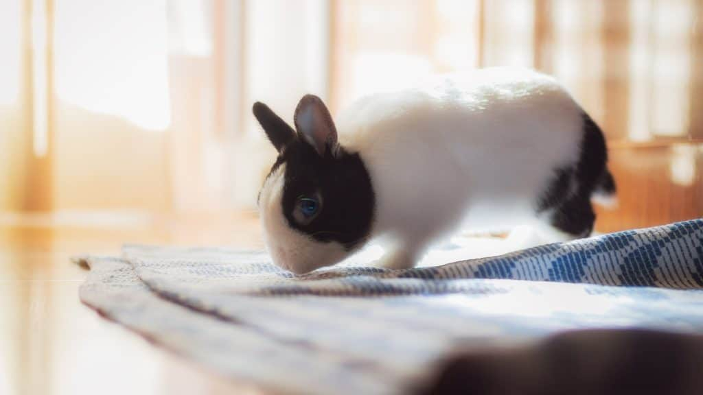 choisir assurance pour lapins