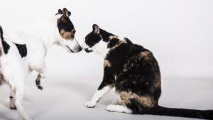 coronavirus et animaux de compagnie