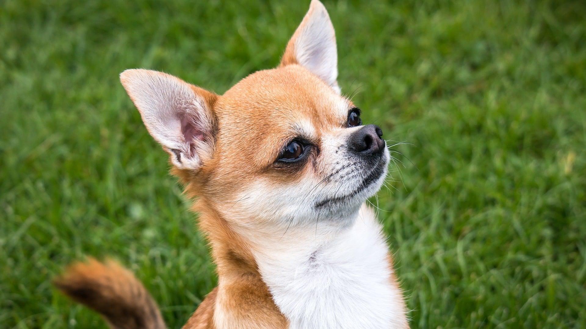santé Chihuahua