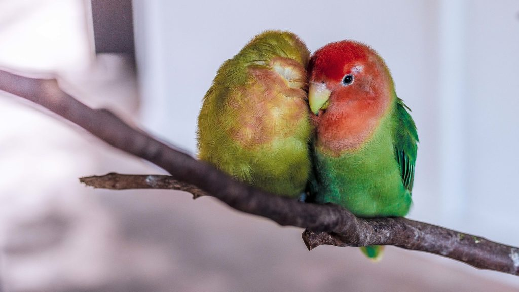 santé et assurance perroquets