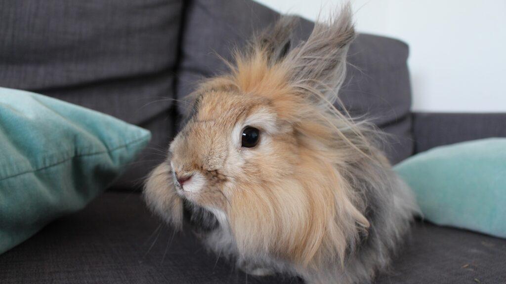 santé et assurance pour lapins