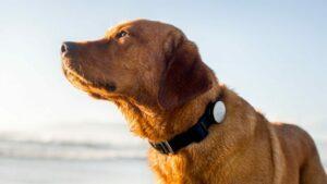 Collier GPS pour chiens