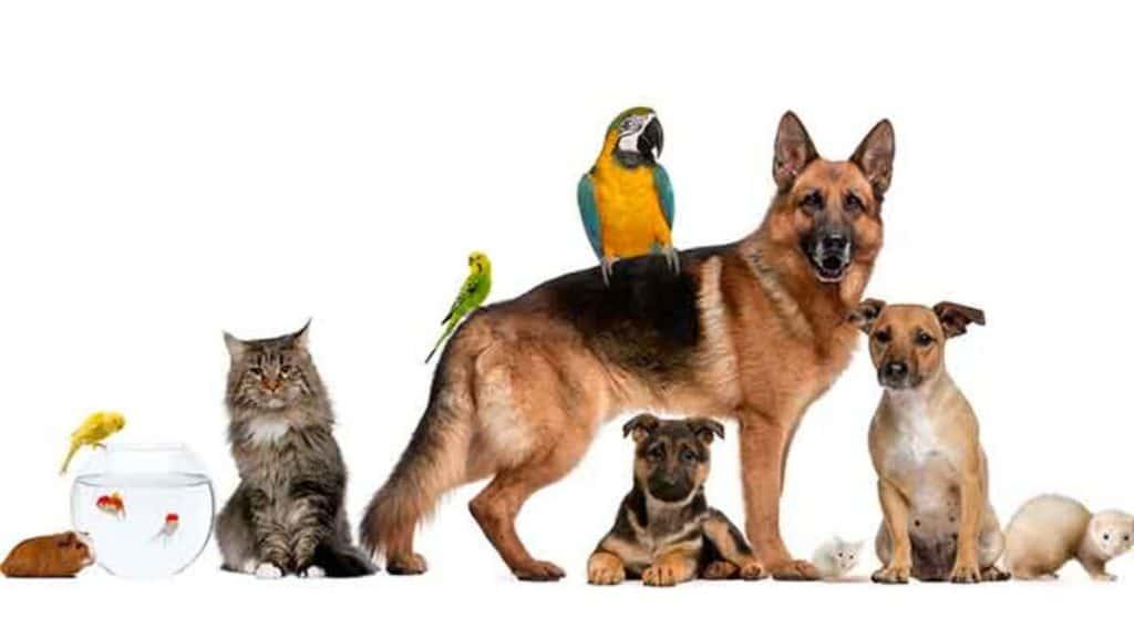 animaux de compagnie autorisés