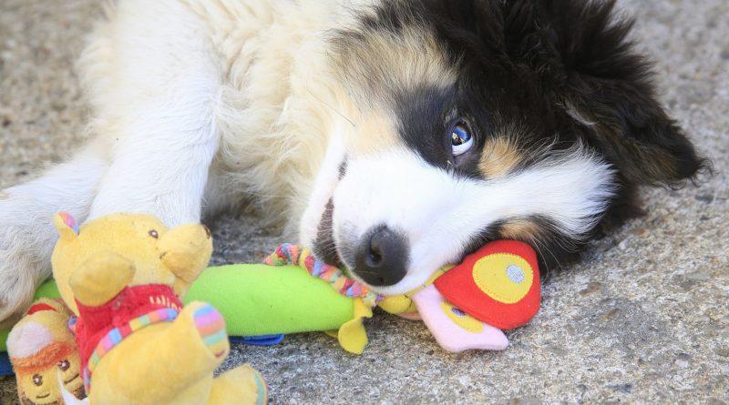 cadeaux pour les amoureux des chiens