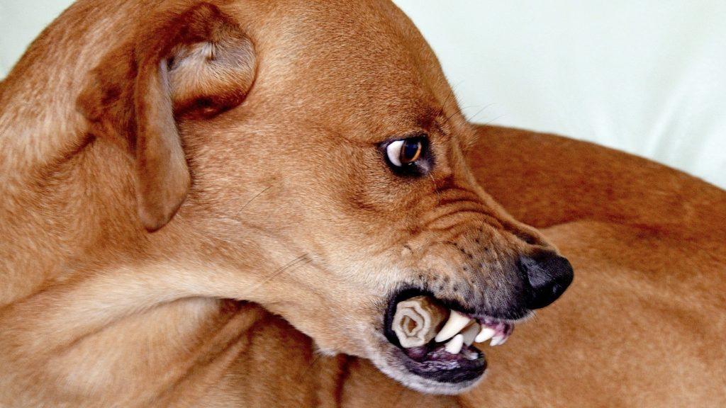 causes du stress chez les chiens