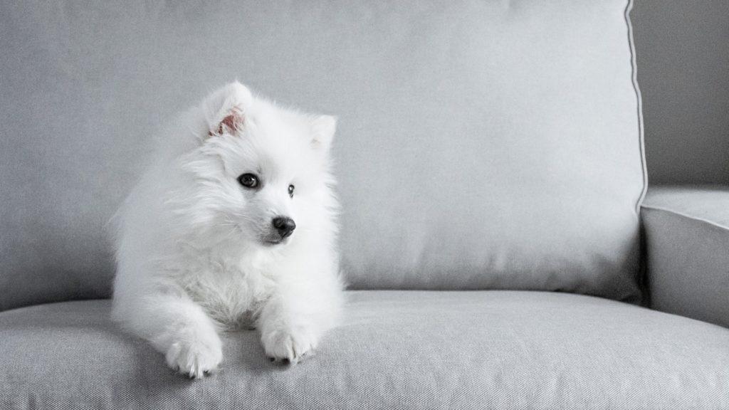 confort chien d'appartement