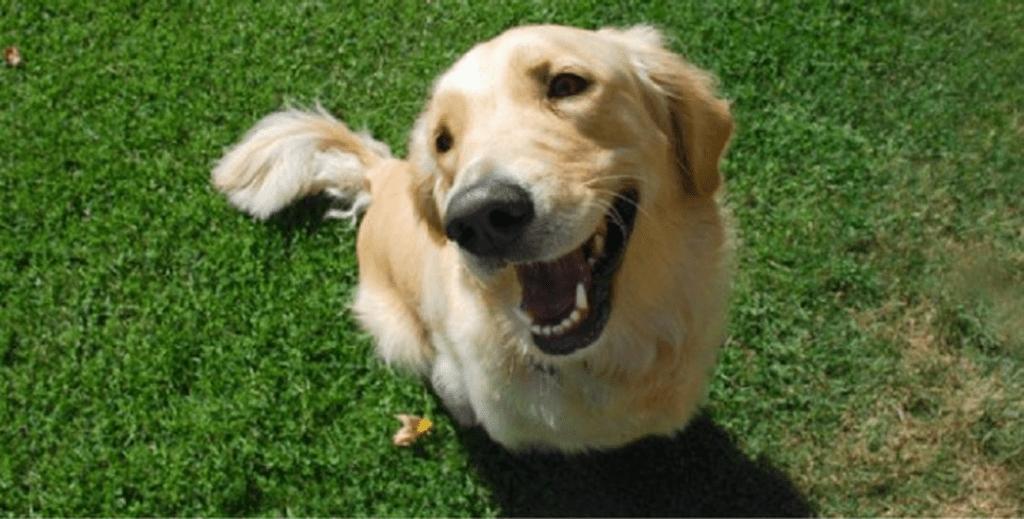 est-ce que le chien sourit