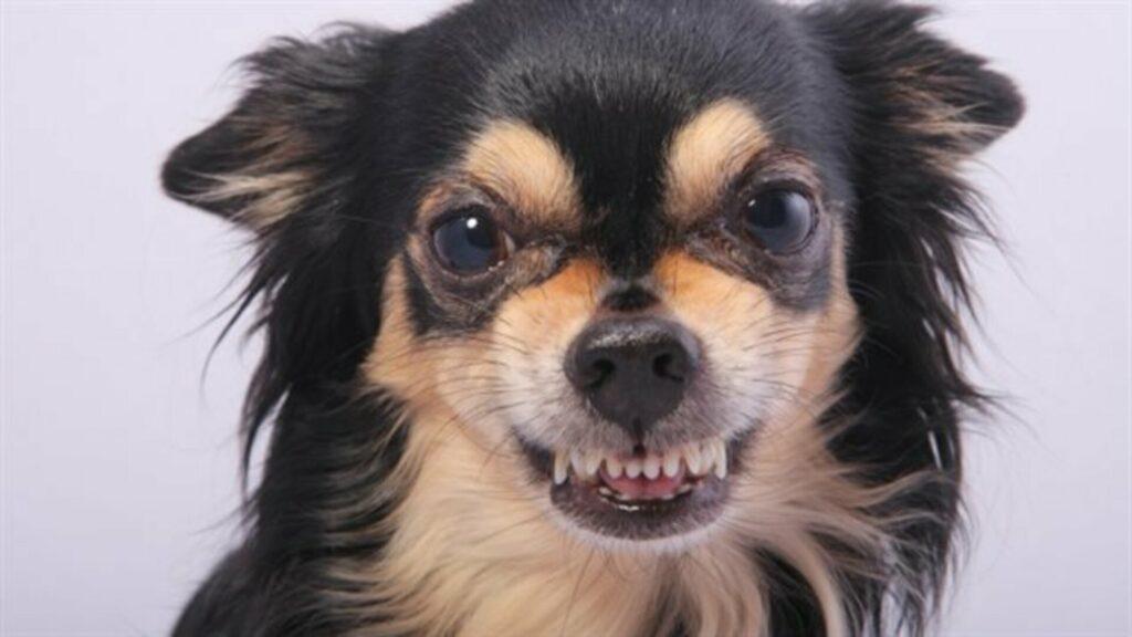 signe qu'un chien sourit