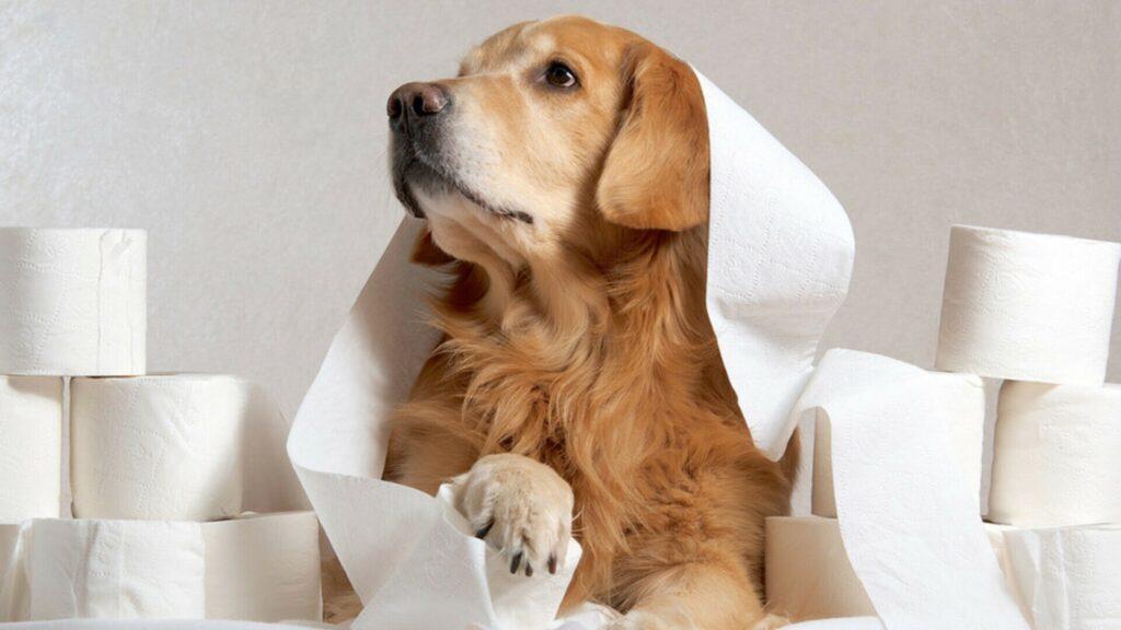 soigner avec smecta pour chien