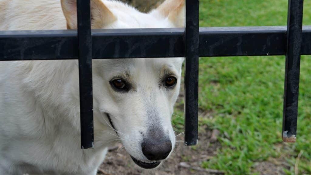 solutions contre le  stress chez les chiens