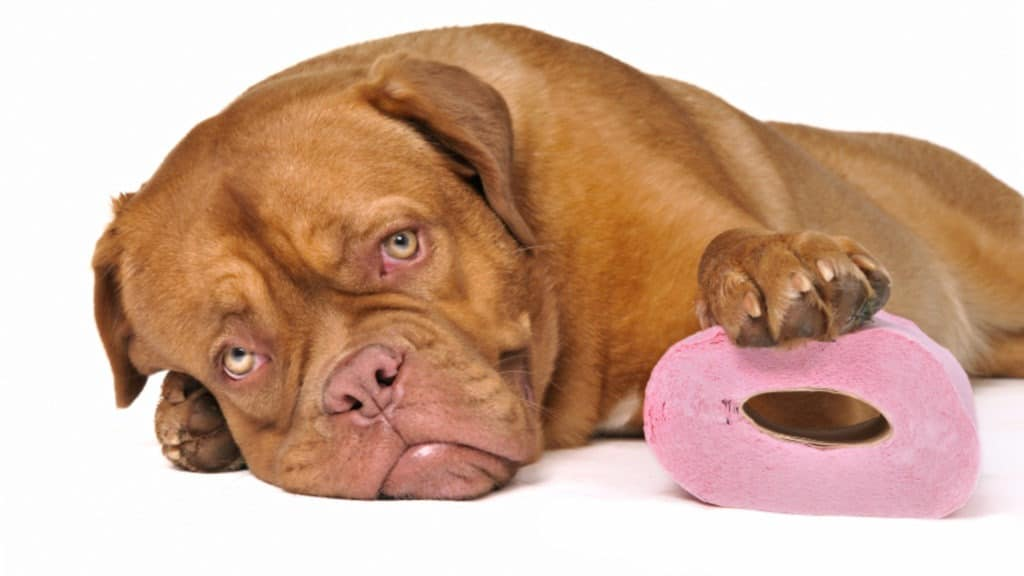 utiliser smecta pour chien