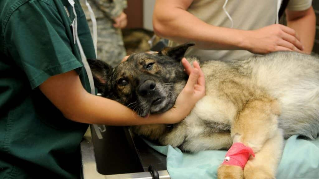 contacter un vétérinaire de garde