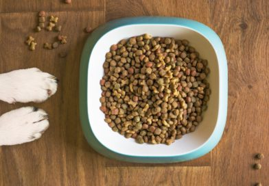nourriture pour chien Petty Well