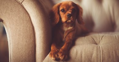 petit chien d'appartement