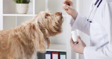 probiotiques pour chien