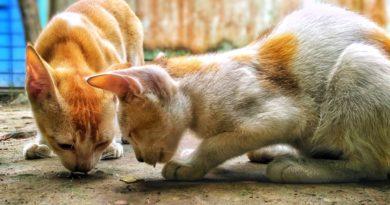 quelle alimentation chaton après sevrage