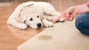 répulsif naturel pour chiens