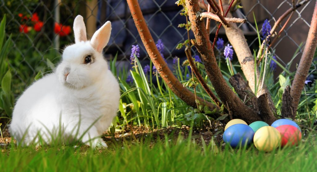sortir le lapin à l'extérieur
