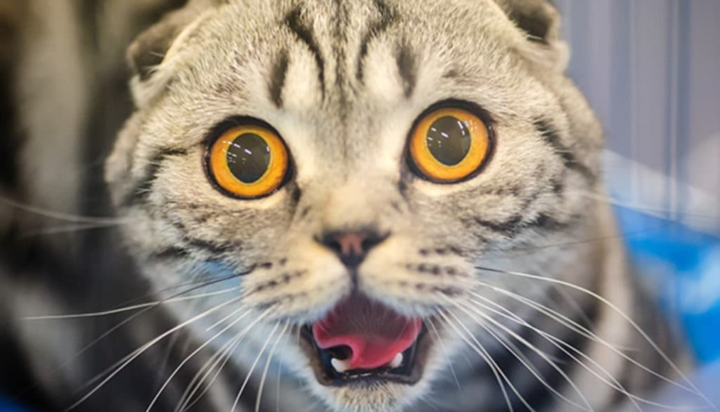 vidéos sur les chats ont peur des concombres