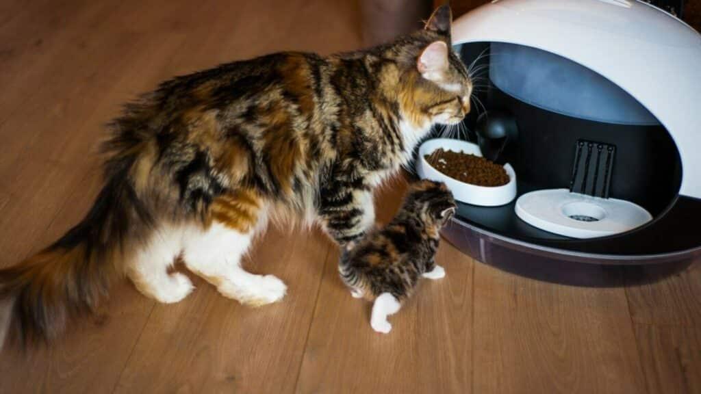 distributeur de croquettes Catspad
